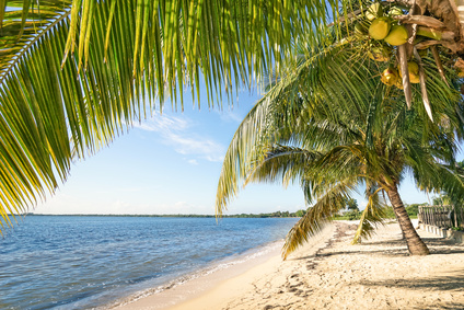 Kokosnuss Öl Naturkosmetik