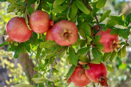 Granatapfel-Extrakt Kosmetik