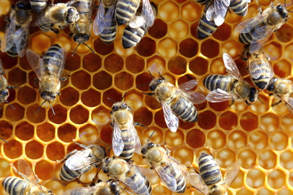 Bienenwachs in Kosmetik